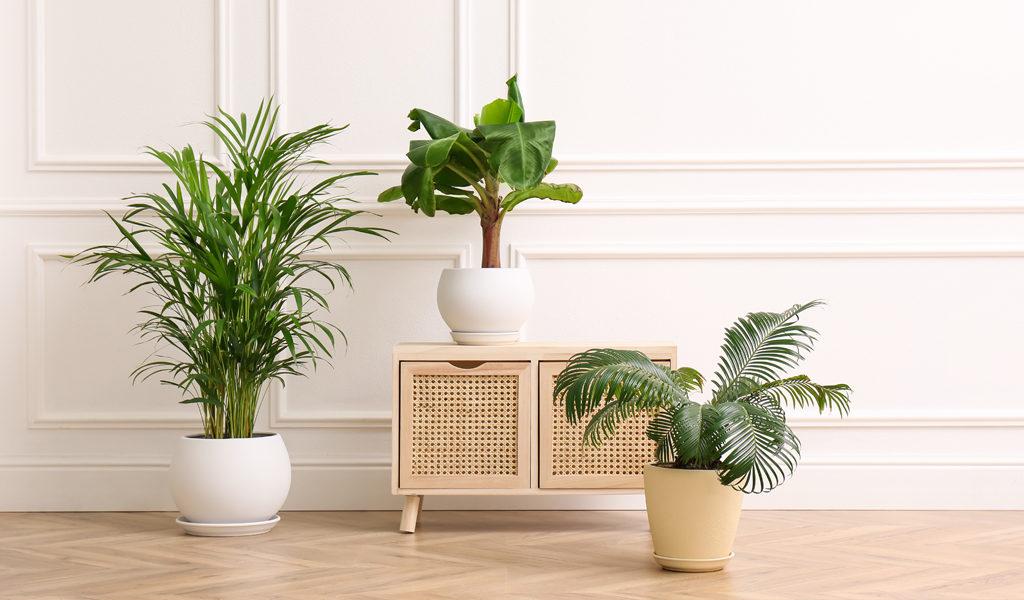 Set van 3 luchtzuiverende planten